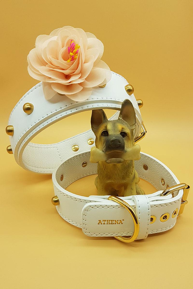 Dogsitter-per-matrimonio.jpg