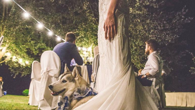 Il Dog Sitter per matrimoni, a Bologna e non solo…