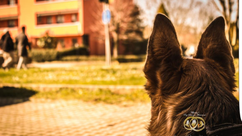 Abbandonare un cane per strada è reato,articolo 727 codice penale