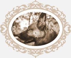 athena-dogsitter-matrimoni-1.jpg