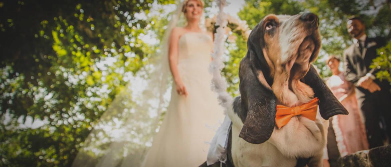 athena-dogsitter-matrimoni.jpg