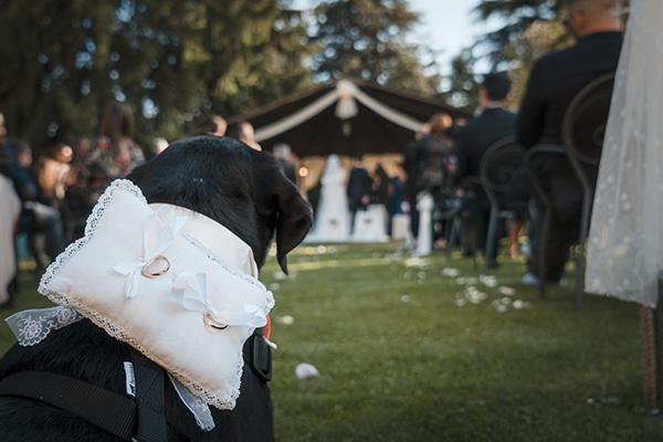 Dog_Sitter_Matrimonio_Athena.jpg