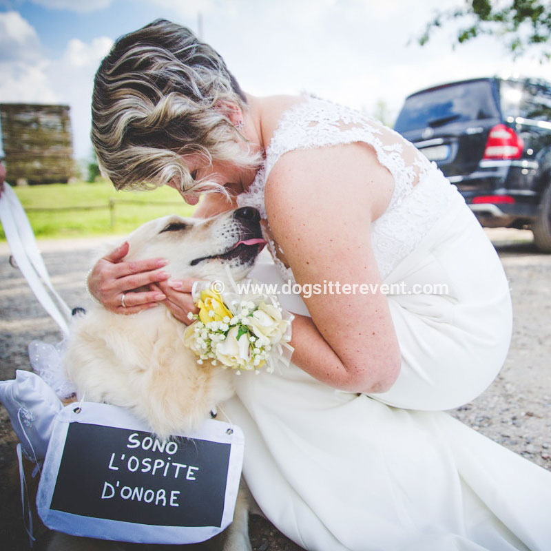 dogsitter-ospite-onore.jpg