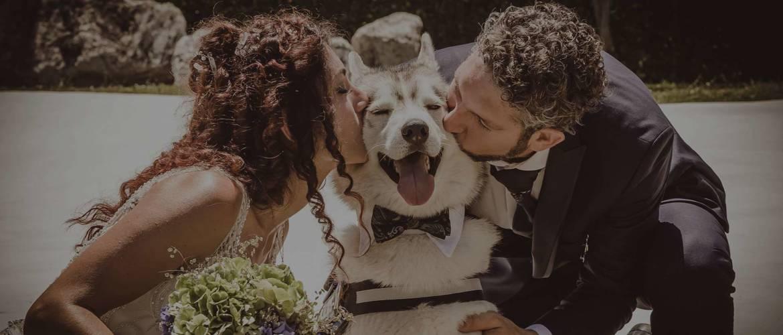 banner3_dogsitter_wedding.jpg