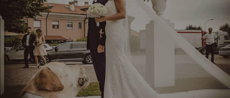 banner4_dogsitter_wedding.jpg