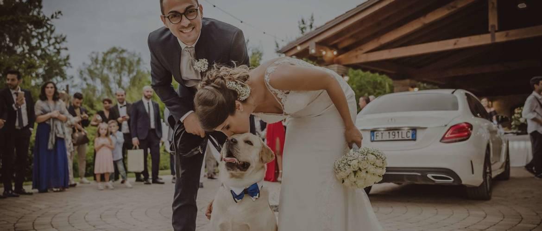 banner5_dogsitter_wedding.jpg