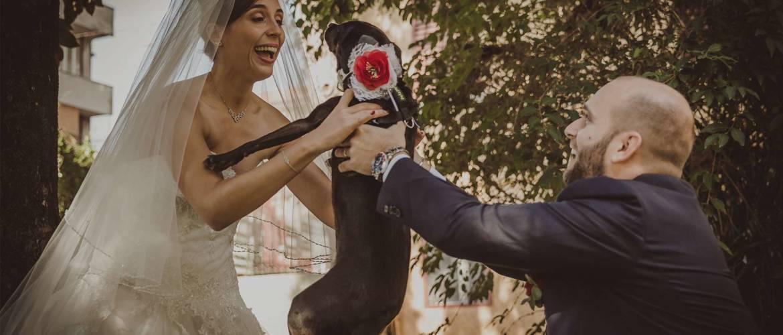 banner_dogsitter_wedding.jpg